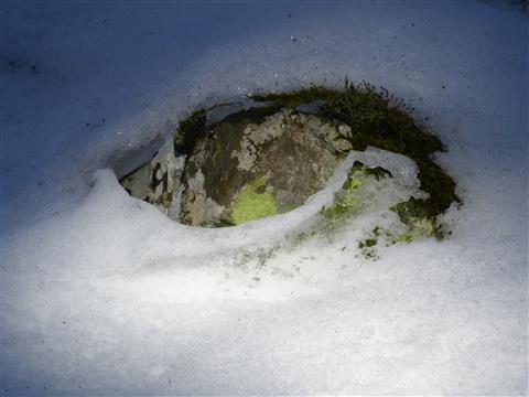 Basaltauge im Schnee