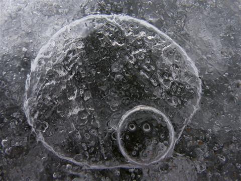 Eislämmchen