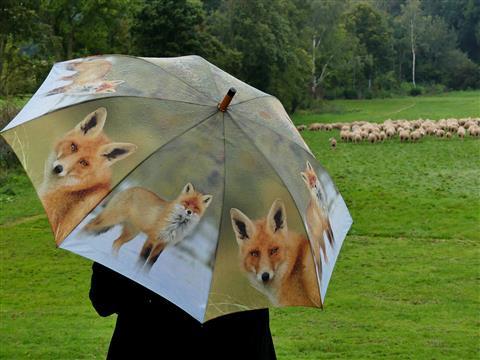 Fuchs und Schafe