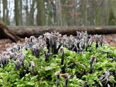 Wald im Wald