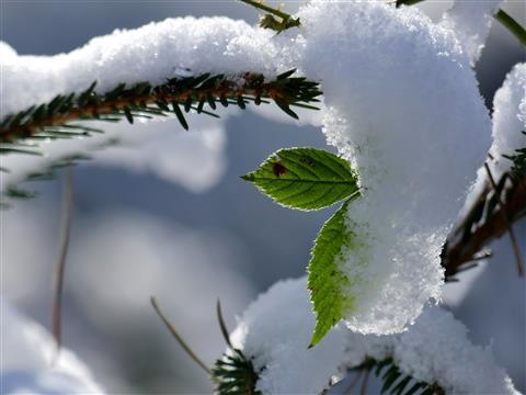 frisches Grün im Frostwald