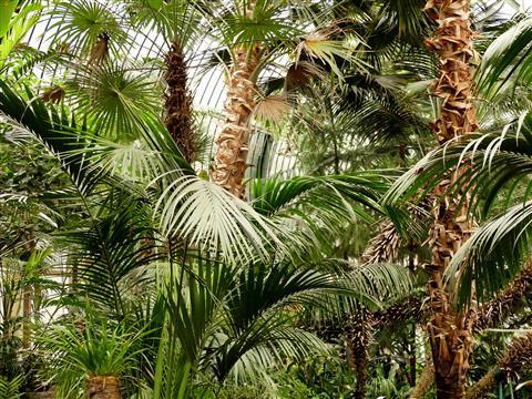 Frankfurt Palmengarten