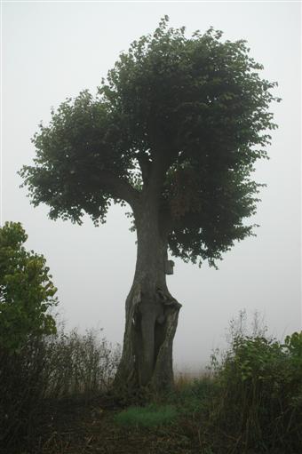Baum im Baum