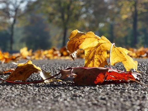 Herbstlich bunter Strassenbelag