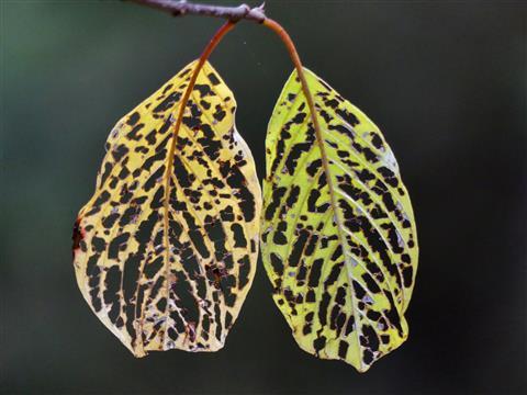Herbstskelette
