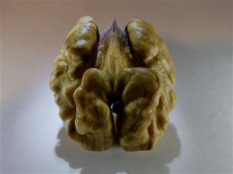 Walnußkern