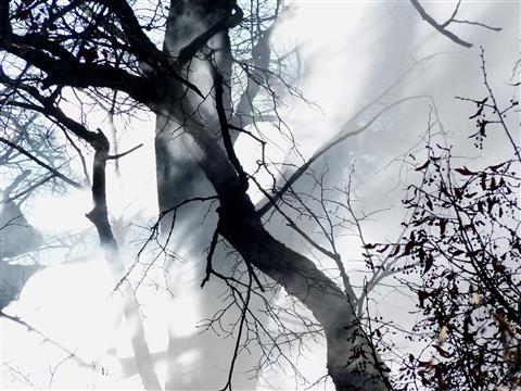 Rauchwolke - Nebenprodukt einer Hackschnitzelheizung