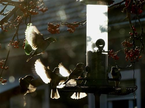 fliegende Lichtgestalten