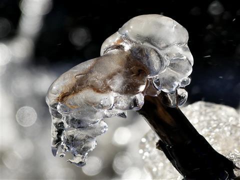 Eiskopf