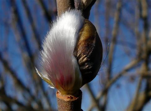 Es wird Frühling-leichte Kopfbedeckung reicht