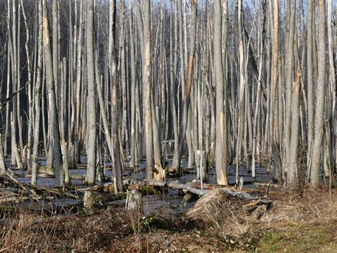 Wo ist hier der Wald