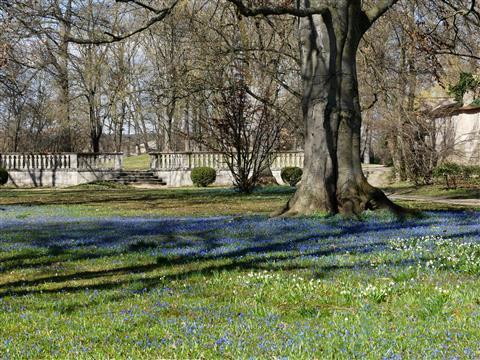 Ellingen Schlosspark Blausternchenblüte