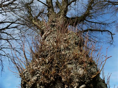 Frühlingsbaumbehaarung