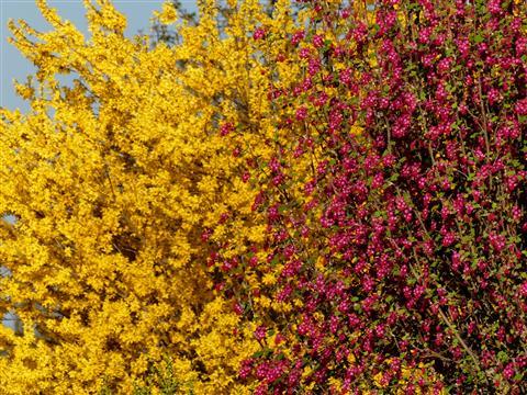 Gelb-Rot im Frühling