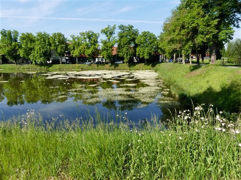 Flutender Hahnenfuß-Triesdorf