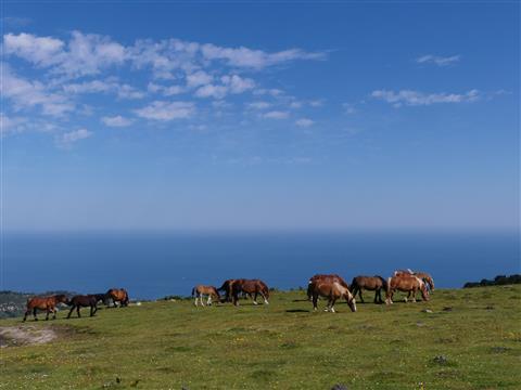 eine Herde schöner Pferde