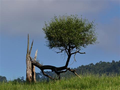 Restbaum-Skulptur