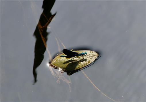 Libellen-Floß