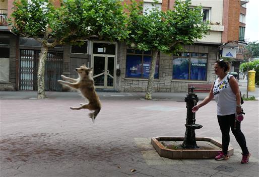 Wasserfanghund