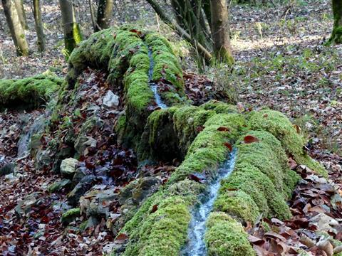 steinerne Rinne Wolfsbronn
