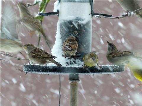 Flocken- und Vogeltanz