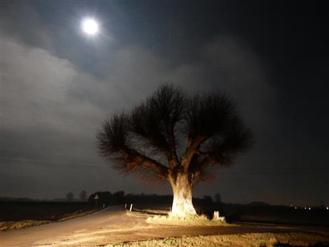 Dezember-Vollmondnacht