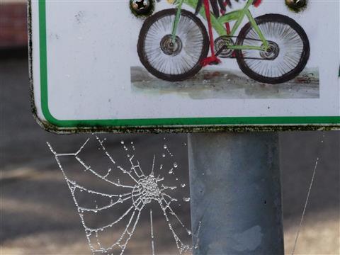 gefrorenes Radnetzspinnennetz