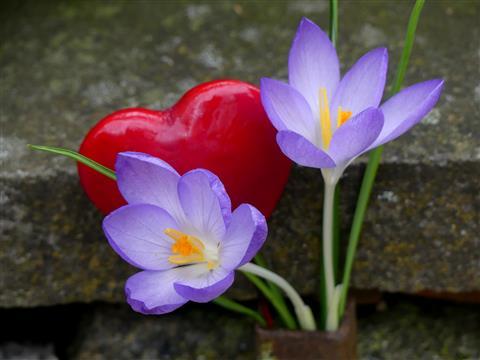 Ein herzlicher Blumengruß an alle in Quarantäne