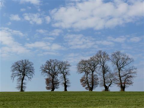 1 - 2 - 3 Bäume