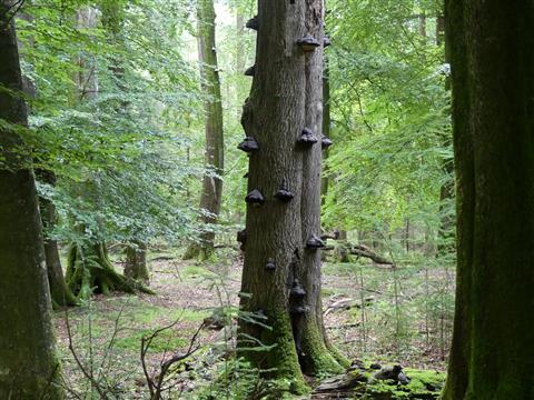 uriger Wald