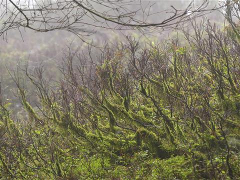 Im Schwarzbeerwald