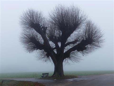 Nebel stellt Schönheit frei