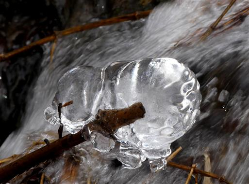 Eisbär gewachsen durch Frost und Wasser