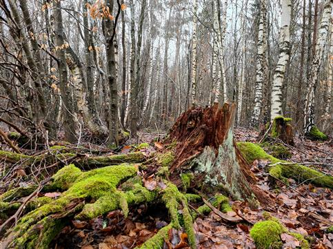 Lichtmeßwald