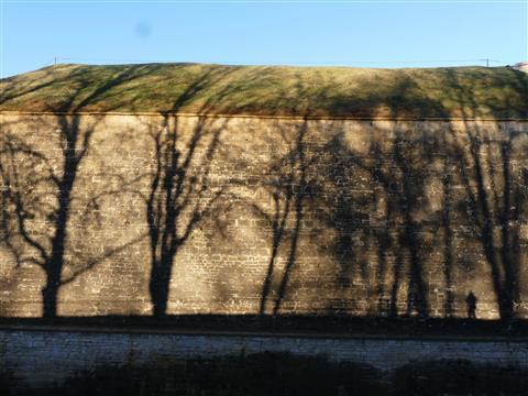 Wülzburg Festungsmauerschattenbäume