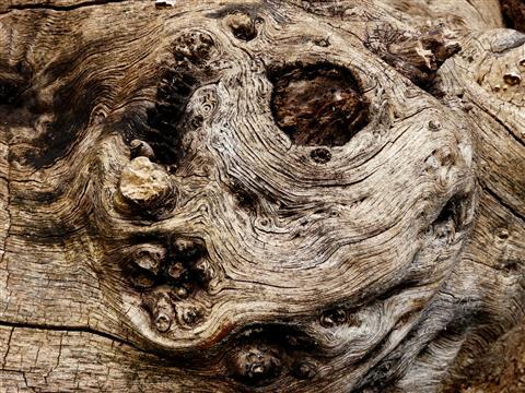 Strukturen im Holz
