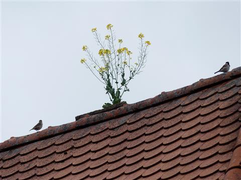 Spatzentreff am Dachgarten