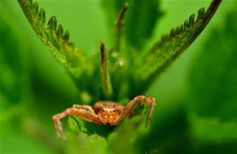 geflügeltes Spinnenwesen