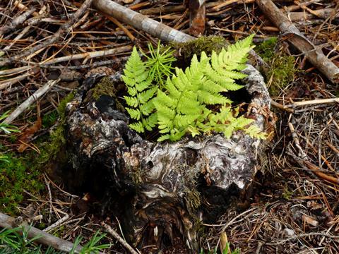 Wald-Vase