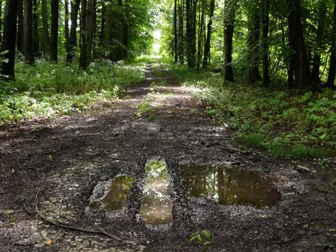 Wald-Spiegel