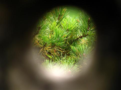 Blick durch Astloch in Baumstumpf