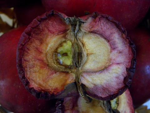 Rotfleischiger Apfel, aufgeschnitten, nach 4 Tagen in der Ausstellung