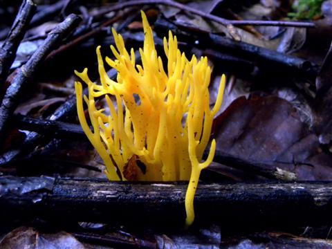 Farbe im Unterholz