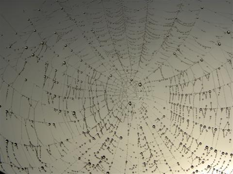 Der Spinnen-Tropfen-Code