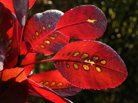 farbenfrohe Blätter