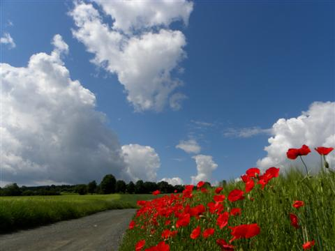 Frankenland am Frankenweg