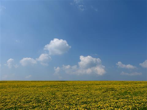 Landschaft bei Rothenburg ob der Tauber