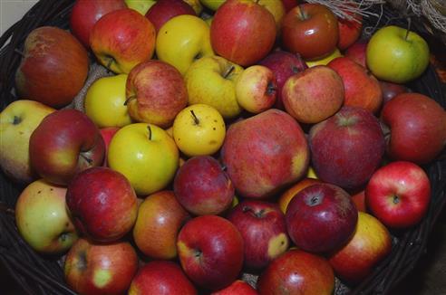 Apfelvielfalt aus dem Triesdorfer Pomoretum