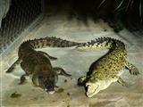 Herzlichst die Krokodile