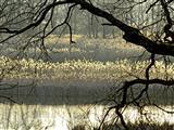 Scheerweiher bei Schalkhausen